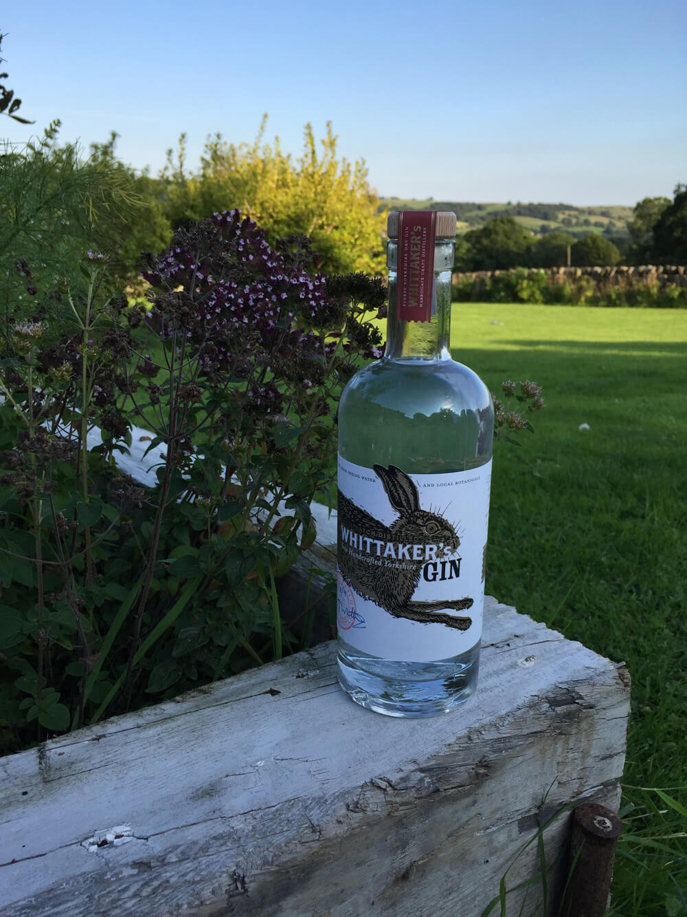 Whittakers_Gin_Garden - ESCAPEMENT Magazine by Angus Davies
