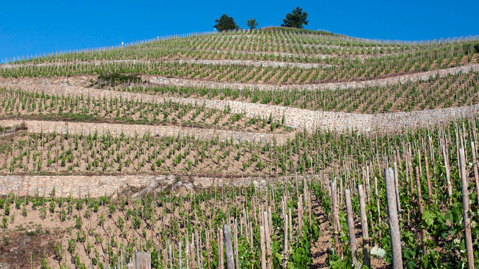 Image of Domaine Jean-Louis Chave Hermitage AOC